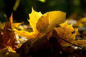 feuilles multicolores sur le terrain