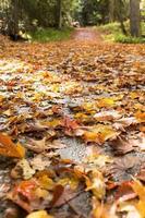 route d'automne photo