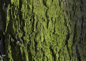tronc d'arbre moussu photo