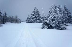 sentier pédestre enfoui sous la neige photo