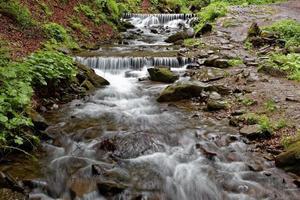 rivière de montagne de la forêt par une journée claire et ensoleillée.