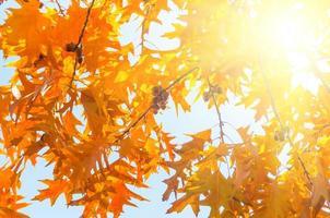 feuilles jaune rouge photo