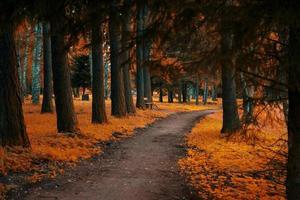 l'automne dans le parc.