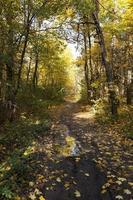 le bois d'automne