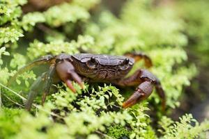 petit crabe photo