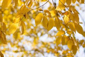 lumière du soleil dans les feuilles jaunes