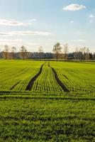 champ vert avec des arbres dans le pays photo