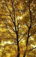 arbre jaune photo