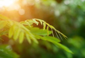 fond de feuilles vertes. photo