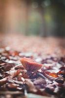 Champignon dans la mise au point sélective de la forêt