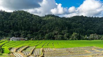 Rizière de paysage à chiang mai / ombre clound