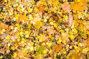 Vue ci-dessus des feuilles jaunes d'automne sur la terre