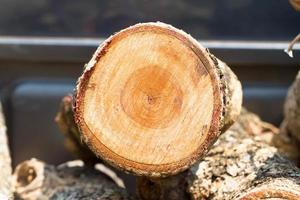pile de bois photo