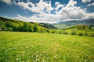 prairies de fleurs vertes dans les Carpates photo