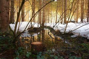 ruisseau au printemps photo