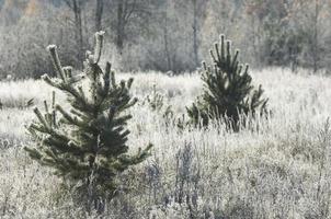 gel d'automne sur l'herbe et les arbres photo