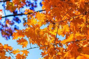 Abstrait automne, vieilles feuilles orange, feuillage d'arbre sec