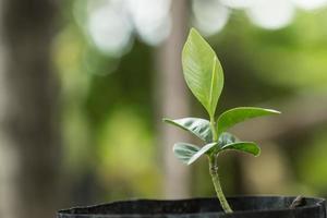 jeune plante dans la lumière du matin photo