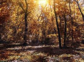 petite clairière dans la forêt d'automne éclairée par le soleil photo