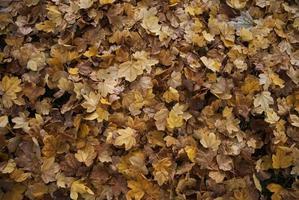 texture d'automne