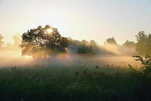 matin brumeux photo