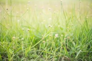 fond de nature abstraite photo