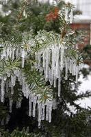 branche glacée photo