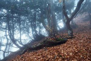 sentier à travers une mystérieuse vieille forêt sombre dans le brouillard. l'automne photo