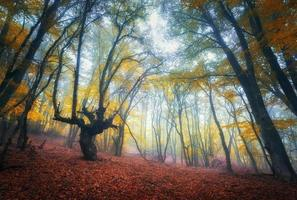 sentier à travers une mystérieuse vieille forêt sombre dans le brouillard. l'automne