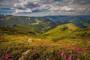 Fleurs de rhododendron rose magique dans les montagnes photo