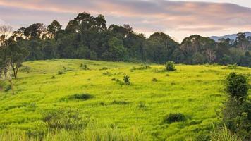 Prairie verte, parc national de Khao Yai Thaïlande