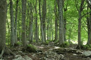 vue de printemps du bois de hêtre