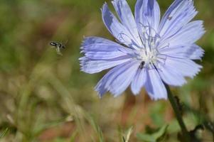 fleurs printanières sauvages