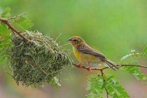 le nid d'oiseau