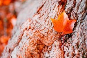 feuilles d'automne lumineuses sur le fond en bois photo