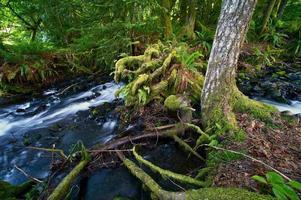 thème de la forêt tropicale photo
