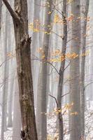 forêt brumeuse avec des feuilles d'automne.