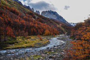 Automne / automne dans le parque nacional torres del paine, chili