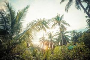 beau fond tropical avec des cocotiers. photo