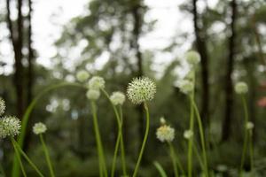 belles fleurs dans la jungle. photo