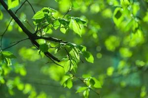 feuillage fond vert photo