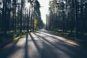 le soleil du matin brille sur la route d'automne. aspect de film granuleux rétro.