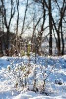 arbres d'hiver couverts de neige par temps froid