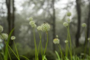 belles fleurs et insectes. photo