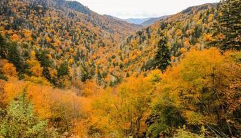 Couleurs vibrantes de l'automne dans les smokies, Tennessee photo