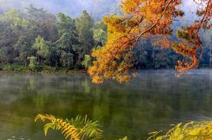 pang-ung, parc forestier de pins, mae hong son, nord de la thailande. photo
