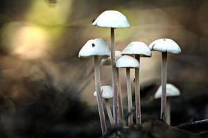 petits champignons vénéneux inhabituels