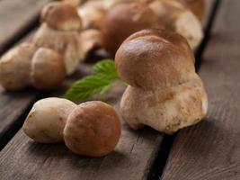 cèpes aux champignons photo