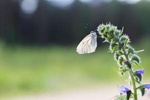 Beau papillon coloré sauvage reposant sur une plante