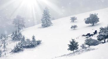 beau paysage d'hiver avec des arbres couverts de neige